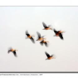 dreamy_flight