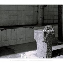 20110206_blr_coffeeboard-1200010_rat