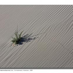 landscape_ladakh_lonely