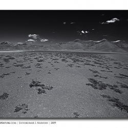 mooreplains_landscape_ladakh