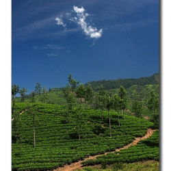 pathtoglory_valparai_mg_8583