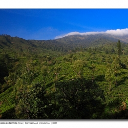 teaestate_valparai_mg_8135