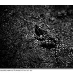 frog_bw_mg_2414-edit