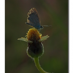 tghalli_butterfly_rimlight_torch