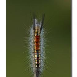 unid_catterpillar_04