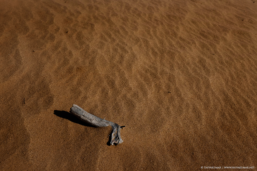 Dead log on desert sand