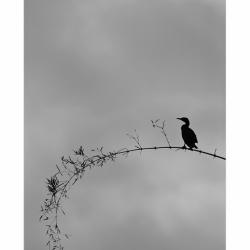 20110126_blr_hebbal-loneliness