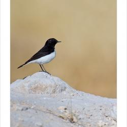 dnpbirds_mg_8485