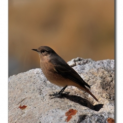 unid_bird_ladakh