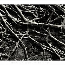 entangledpatterns