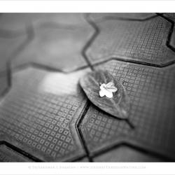 floweronleaf
