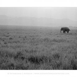 20110000_kodaktrix-020-elephantscape