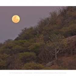 20110319-ramngr-supermoon-8040-jtn