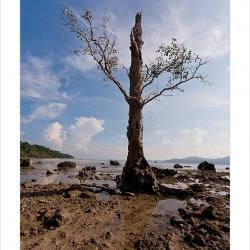 20111021-andaman-3999