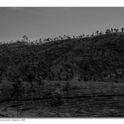 bw_landscape_valparai_mg_8607