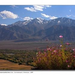 landscape_ladakh_flowerworld