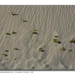 landscape_ladakh_spotted