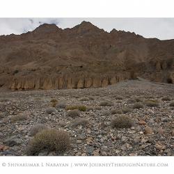 landscape_spiti_enroutetopinvalley