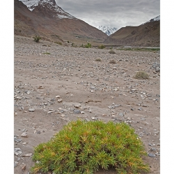 landscape_spiti_greenbush