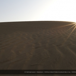 landscapewizards_carlzeiss21f28_sunburst