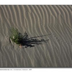 lifeindesert_landscape_ladakh