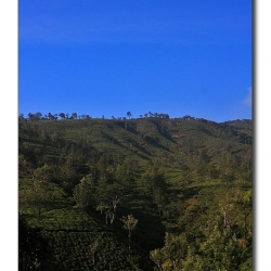 teaestate_valparai_mg_8141
