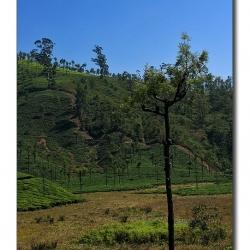 tree_bird_scape_valparai_mg_8608