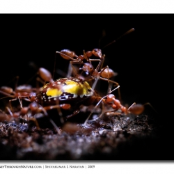 ants_at_night