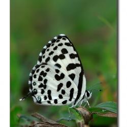 butterfly_01