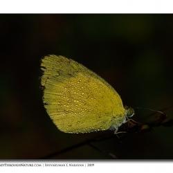 butterfly_dew02