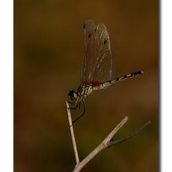 dragonfly_01