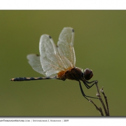 dragonfly_02