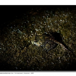 frogspotlit_mg_2398-edit