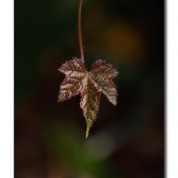 leaf_portrait