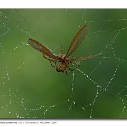 preypredatorweb_mg_2082
