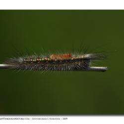 unid_catterpillar_03