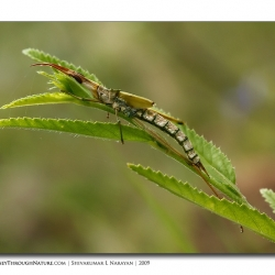 unid_insect_02