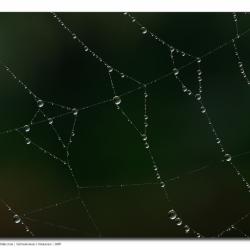 web_mg_2119