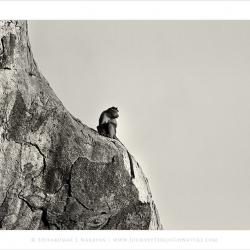 20110508-bellary-ctb-0093