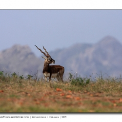 black_buck_world