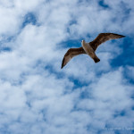 Free bird in sky HD Wallpaper Download
