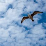Free bird in sky HD Wallpaper Download
