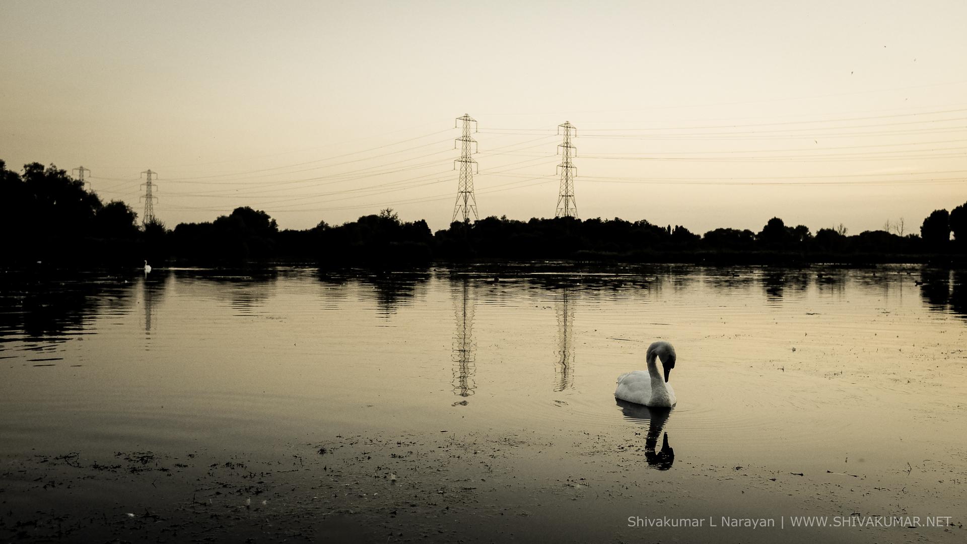 Free bird in lake HD Wallpaper Download