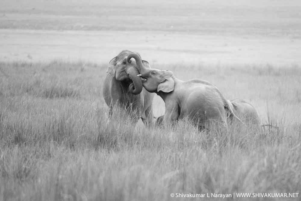 Elephants at Corbet National Park