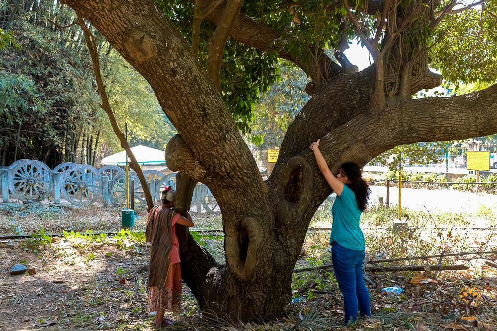 Hug a tree campaign