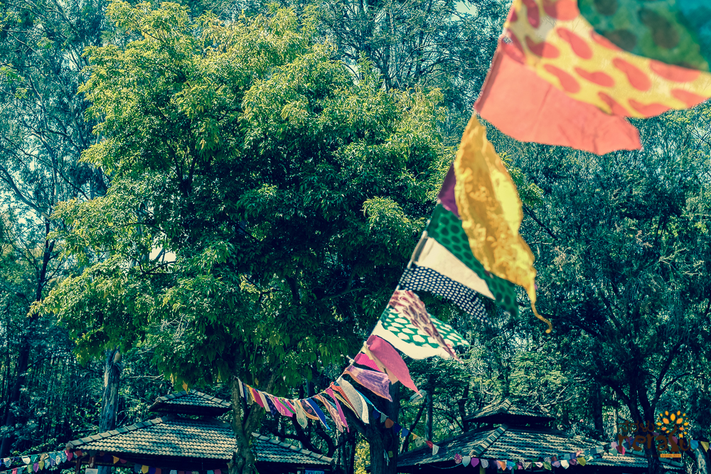 Neralu Tree Festival, Bangalore