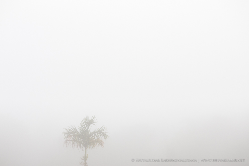 Negative Space / Positive Space in Composition / Tree in mist