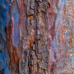 Colorful Imperfections - Nature Abstract Series