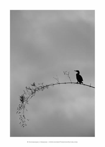 20110126 blr hebbal-loneliness
