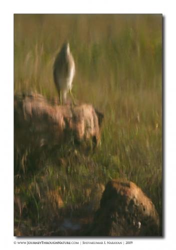 bird n rock